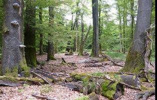 Forstliches Bildungszentrum Hachenburg (FBZ)