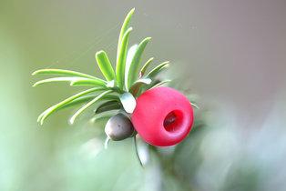 Pflanzen des Monats