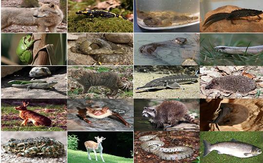 Die Wirbeltierfauna des rheinland-pfälzischen Westerwaldes und der angrenzenden Flusstäler
